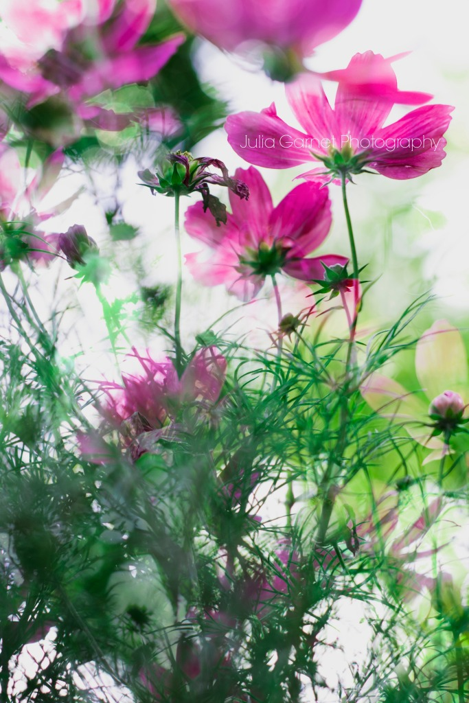Layers of Flowers