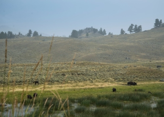 Buffalo Fields